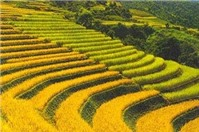 Lấn chiếm đất nông nghiệp, xử phạt thế nào?