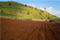 Tư vấn về mượn đất để canh tác nhưng không trả