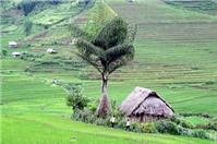 Trồng cây trên đất của người khác bị xử lý như thế nào?