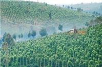 Đất nông nghiệp có được chuyển nhượng, tặng cho không?
