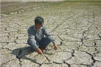 Chuyển từ đất trồng lúa sang đất trồng cỏ, chăn nuôi