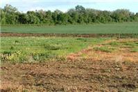 Tư vấn về tố cáo đối với vi phạm về đất đai
