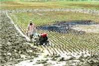 Thủ tục chuyển mục đích sử dụng đất trồng lúa sang nuôi trồng thuỷ sản